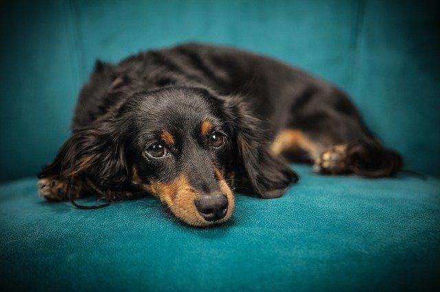 Skal din hund have ny hundekurv? Find tips her!